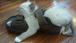 gato-gracioso-sandalia