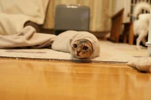gato-gusano