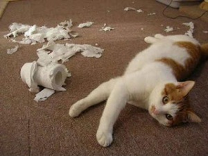 gato-travieso-consejos