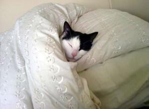 Gatosencasa_gato en la cama_AvaK